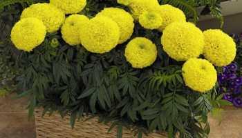 Цветы на балконе: названия, советы по расположению